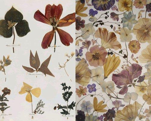 Как сделать и оформить гербарий из листьев