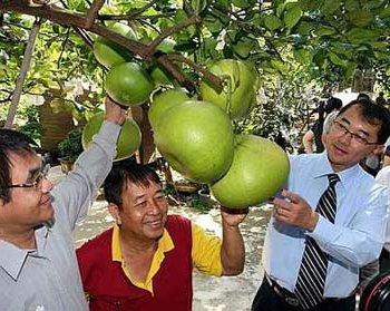 Где растет помело фрукт
