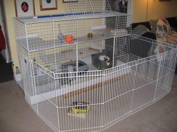 Клетки своими руками для домашних кроликов