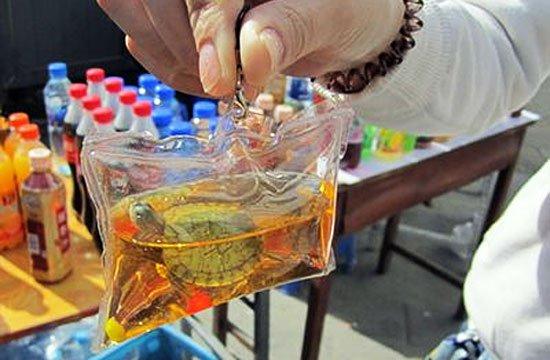 В Китае живые животные продаются в качестве брелоков для ключей