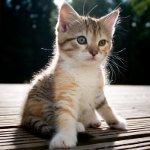 Как определить пол котенка?