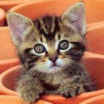 Что делать если котенок чихает