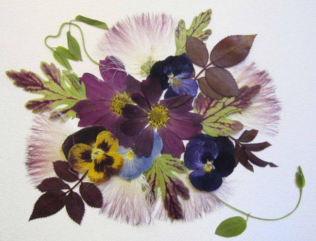 Ошибана: прессованная флористика