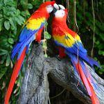 Как выбрать попугая