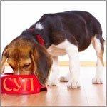 Преимущества и недостатки сухих кормов для кошек и собак
