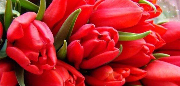 Поздравления с 8 марта: стихи и не только