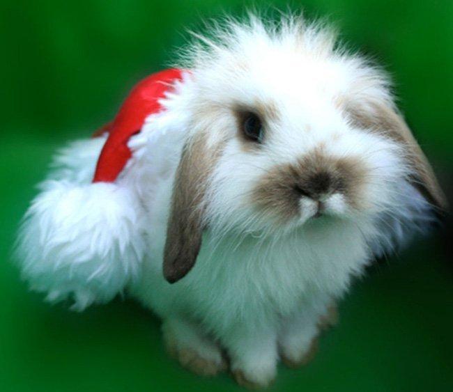 Поздравления с новым годом Кролика