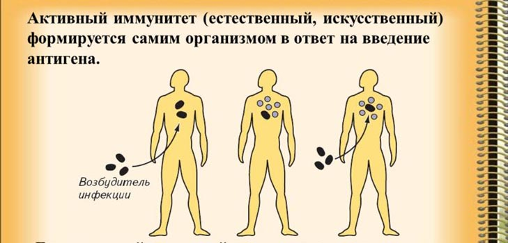 Иммунитет: на страже здоровья