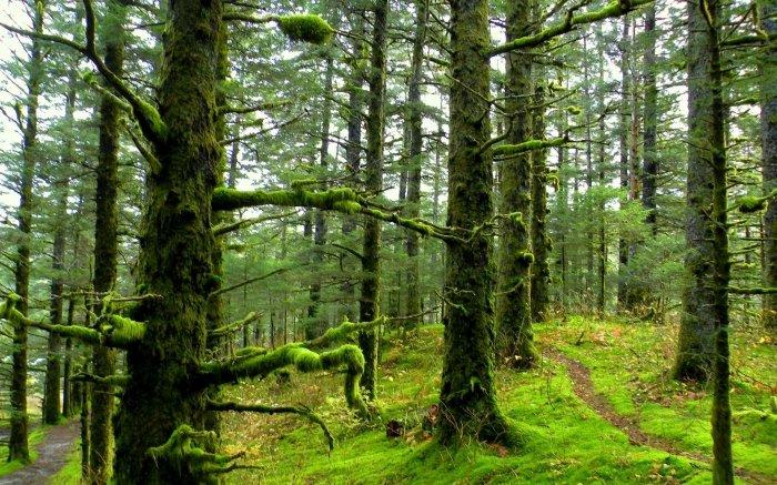 Смотрим сонник: лес