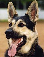 Приемы воспитания и дрессировки собак