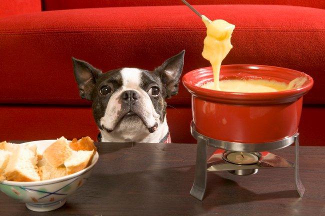 Лакомства для собак: советы по правильному питанию
