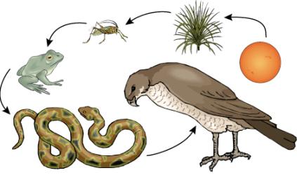 осина от паразитов как принимать