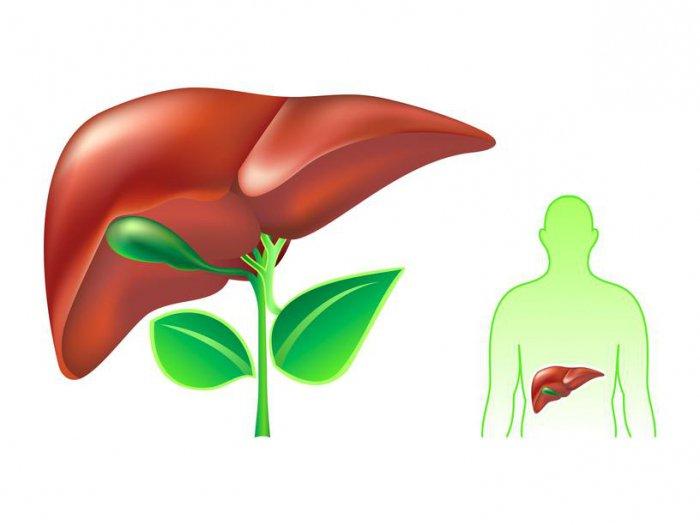 В УЗИ брюшной полости что входит? УЗИ органов брюшной полости что показывает?