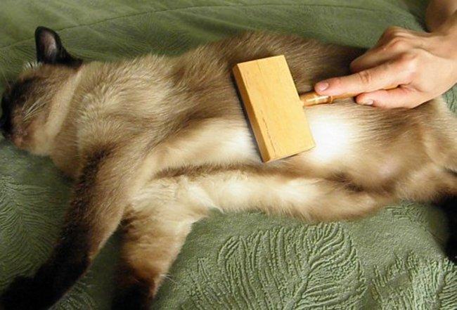 У кошки выпадает шерсть
