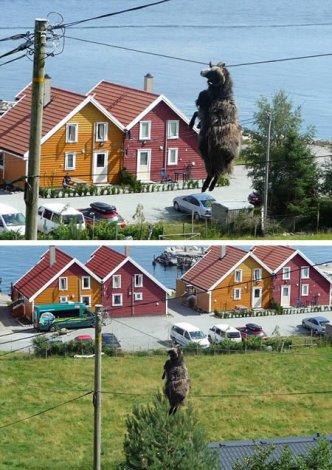 10 необычных происшествий с животными