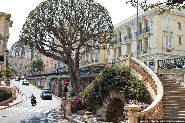 Интересные факты о Монако (13 фото)