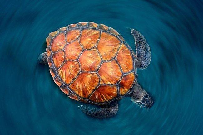 25 лучших работ с фотоконкурса Золотая черепаха (25 фото)