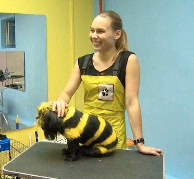 Салон по раскраске животных (4 фото + видео)