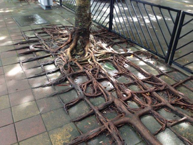 Квадратные корни в Гуанчжоу (фото дня - 05.11.2014)