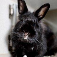 Какие прививки делать домашним кроликам - видео вакцинации кроликов в домашних условиях