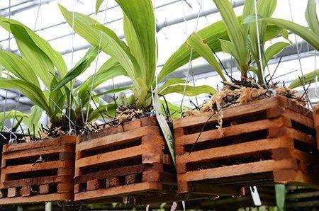 Орхидея: уход после цветения