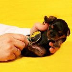 Вакцинация щенков: какие прививки нужны щенку?