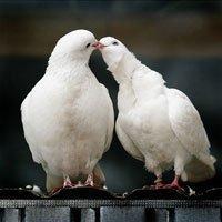 День святого Валентина. Традиции празднования в странах мира