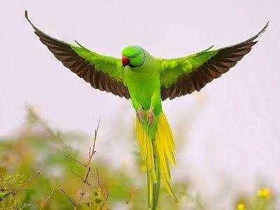 Толкование снов. К чему снятся попугаи