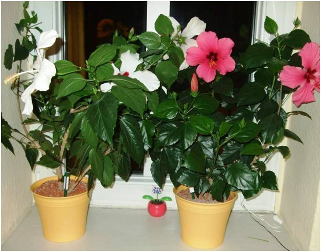 Выбираем комнатные цветы по знакам Зодиака