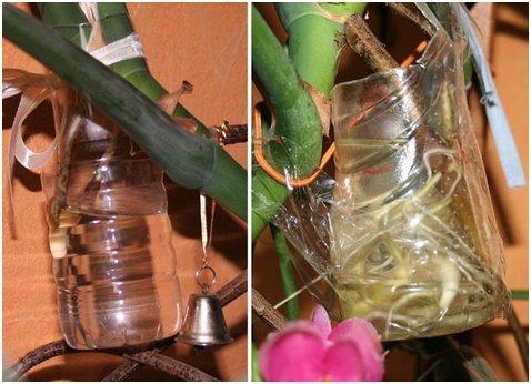 Выращивание и уход за монстерой в домашних условиях
